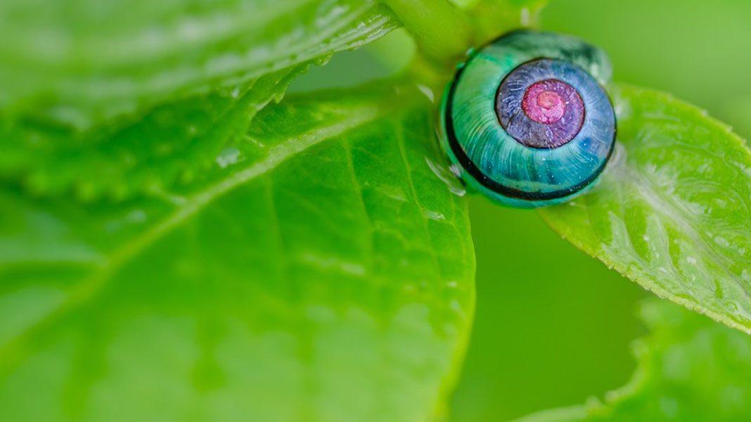 Podiplomski študij na Visoki šoli za varstvo okolja